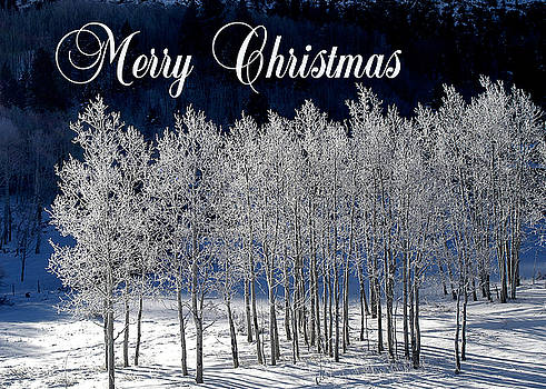 Frosty Trees Christmas Card by Roy Kastning