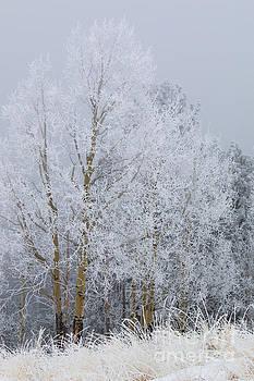 Steve Krull - Frosty Trees for Thanksgiving on Bald Mountain