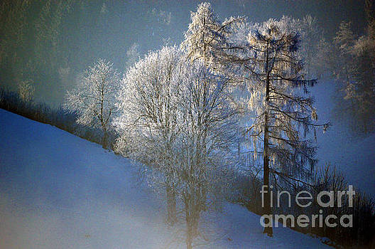 Frosty Trees - Winter in Switzerland by Susanne Van Hulst