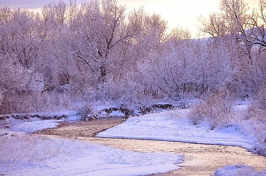 Frosty Winter Evening by D Nigon