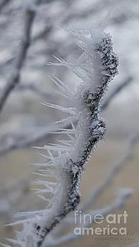 Frozen 2 by Ronald Hoehn