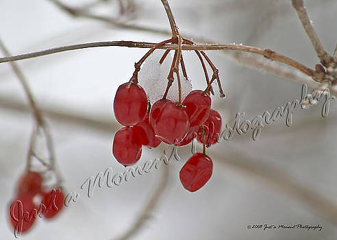 Frozen Berries by Shelley Grabow