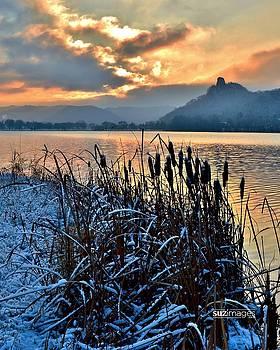Frozen Cattails by Susie Loechler