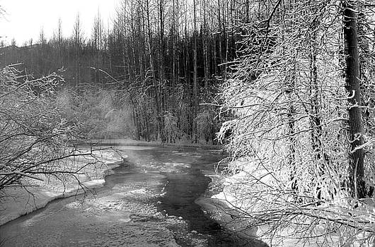 Frozen Creek in Woods by Kimberly Blom-Roemer