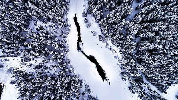 Frozen Forest in the Italian Alps by Gian Lorenzo Ferretti