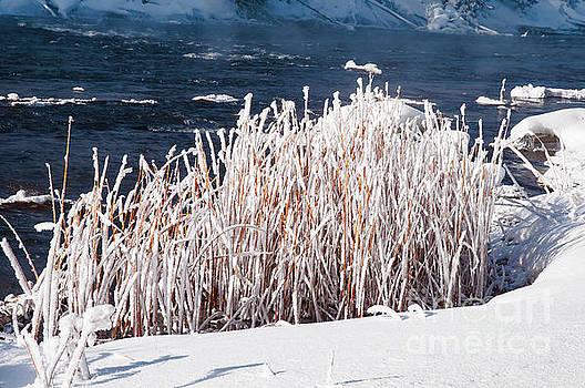 Bob Phillips - Frozen Grasses