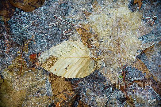 Frozen in Ice  by Alana Ranney