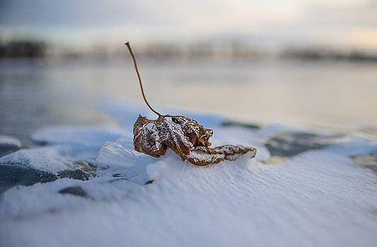 Frozen Leaf on Lake Reno by Alex Blondeau