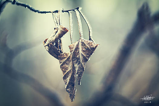Frozen Leaves by Adnan Bhatti