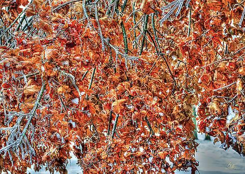 Sam Davis Johnson - Frozen Oak