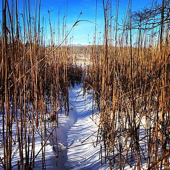 Frozen Path. #adventure #path #cove by Carly Barone