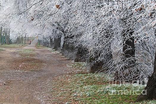 Frozen pathway by Katerina Vodrazkova