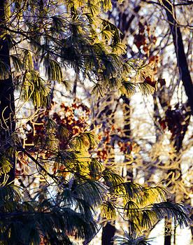 Sam Davis Johnson - Frozen Pine Sunrise