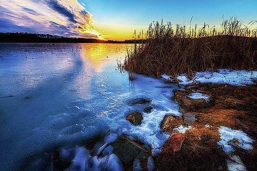 Sylvia J Zarco - Frozen Plume of Great Meadow Sun