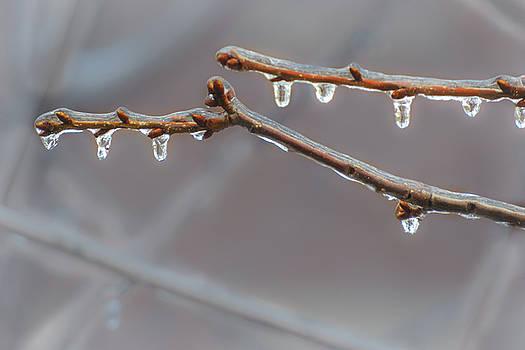 Sylvia J Zarco - Frozen Raindrops