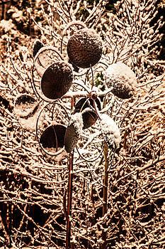 Frozen Stillness by Mick Anderson