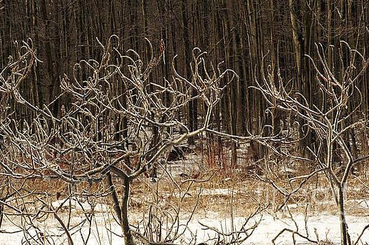 Frozen Sumacs by Elaine Mikkelstrup