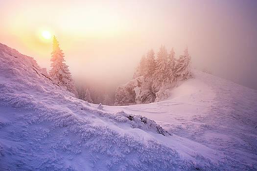 Frozen by Toma Bonciu