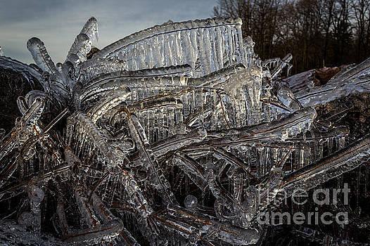 Frozen tree by Marj Dubeau