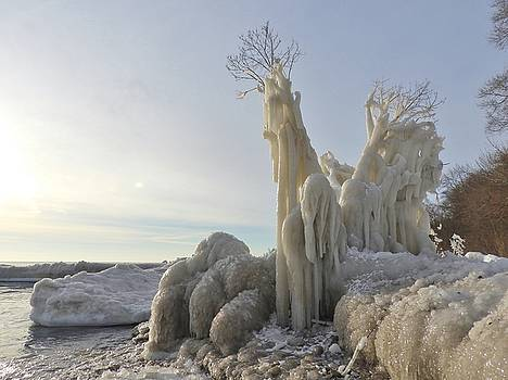 Frozen Tree by Red Cross