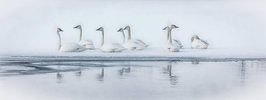 Frozen Tundra by Kelly Marquardt