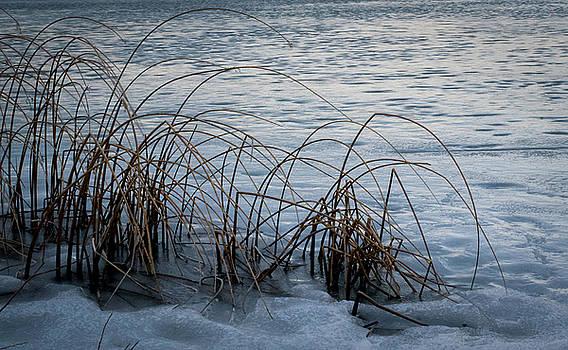 Winter Water Grass by Susan Hamilton