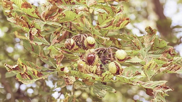 Jacek Wojnarowski - Fruit of the Horse Chestnut Tree Opening B