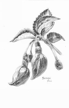 Fuchsia by Brenda Hill
