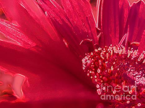 Fuchsia Flower by Eve Penman