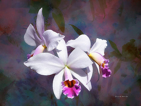 Fuchsia Symphony by Celia Durand