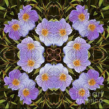 Fucsia flowers by Jesus Nicolas Castanon