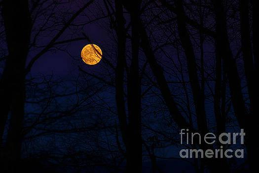 Full Moon and Belt of Venus by Thomas R Fletcher