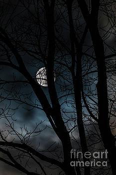Full Moon by Mim White
