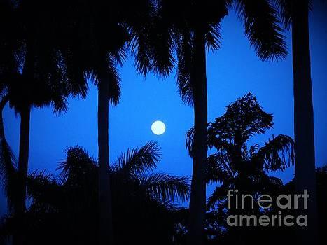 Full Moon on a Balmy Blue Night by Debb Starr