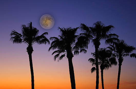 James BO  Insogna - Full Moon Palm Tree Sunset