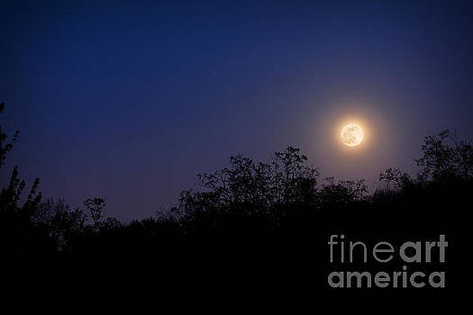 Full Moon Rising Over Trees by Sharon Dominick