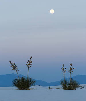 Full Moon Setting Over Yucca by Focus On Nature Photography