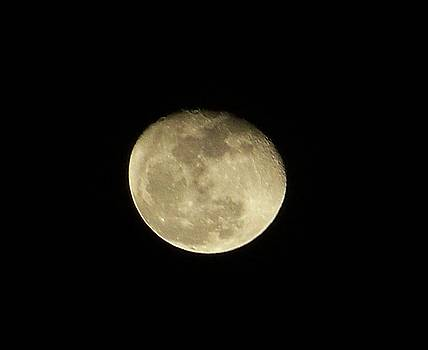 Full Moon by Susan Anderson