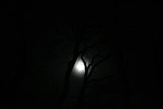 Full Moon Through Trees by Marilyn Hunt