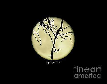 Full Moon with Tree branchs  by Yumi Johnson
