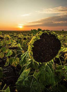 Full of seed  by Aaron J Groen