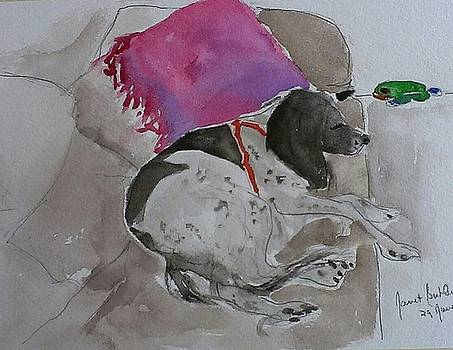 Fulmi and pink pillow by Janet Butler