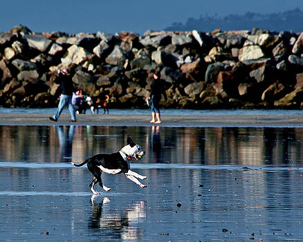Fun at the Dog Beach by Richard Hinds