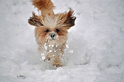 Fun in the Snow by Andrea Everhard