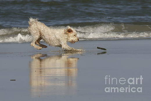 Fun in the surf by Myrna Bradshaw