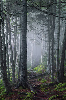 Fundy Fog by Tracy Munson