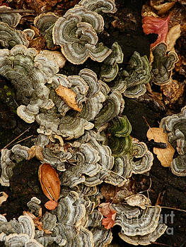 Fungi on Deadwood by Robert Ball