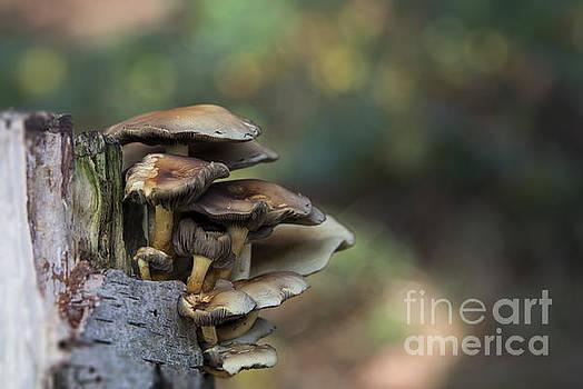 Compuinfoto  - fungus