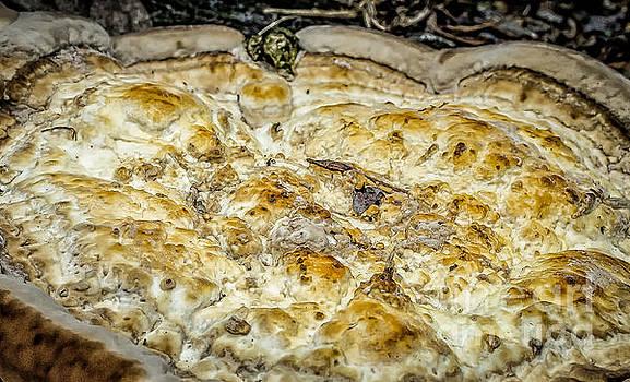 Kathleen K Parker - Fungus Pizza