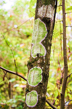 Stacey Rosebrock - Fungus